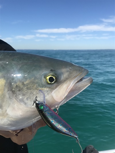 Bluewater metro fishing report 14 04 2017 fishing for Oceanside pier fishing reports