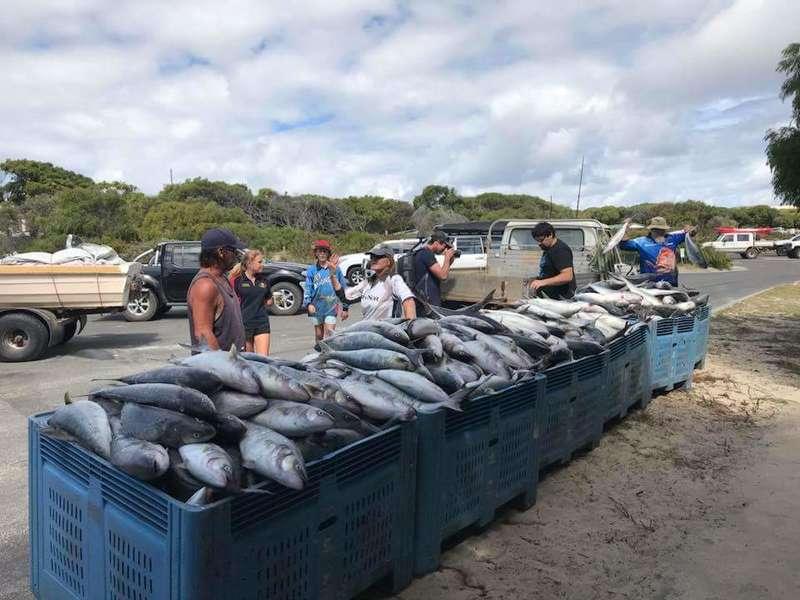 Salmon hamlin bay fishing fishing wa for Salmon fishing bay area