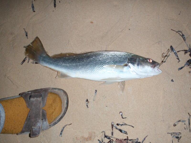 Reports | Fishing - Fishwrecked.com - Fishing WA. Fishing Photos ...