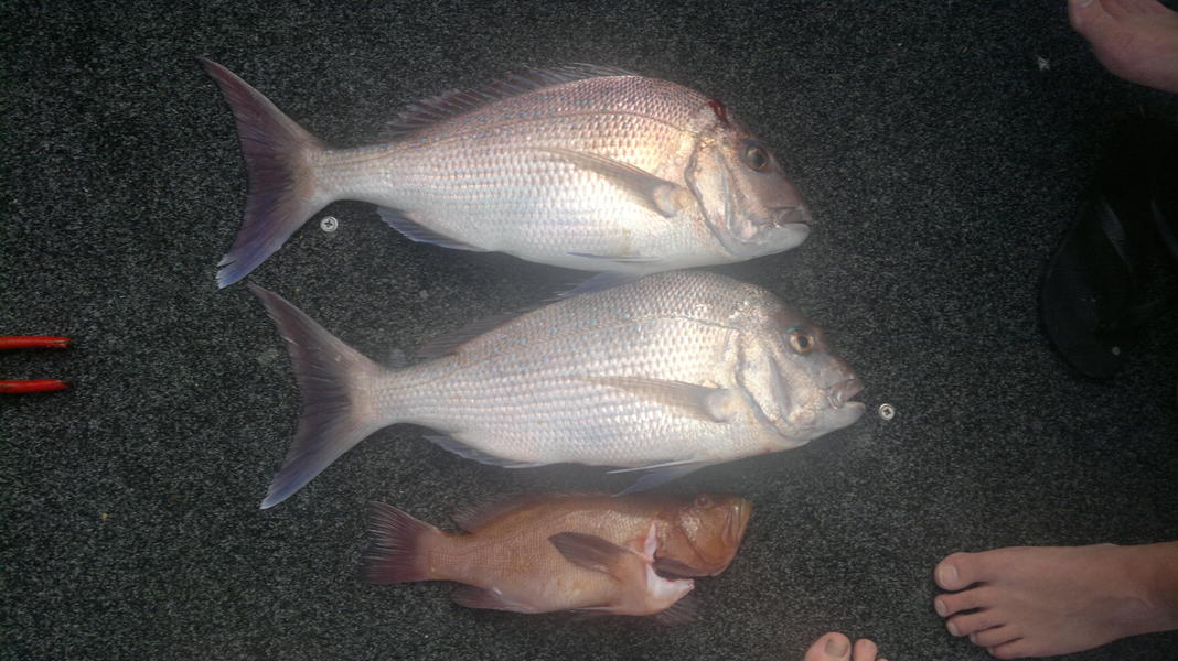 how to catch land based snapper