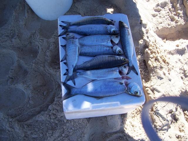 a nice feed down on the beach
