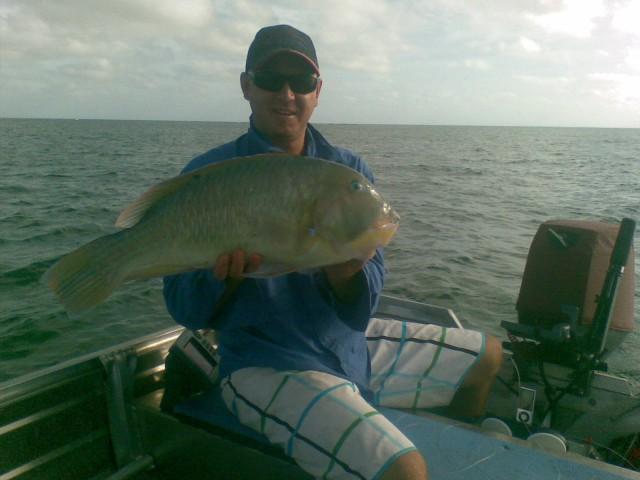 62cm Bluebone !