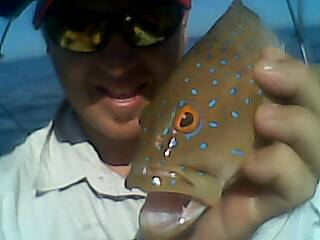 Baby Coral Trout