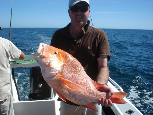 XL RED caught off the dampier coast