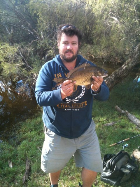 43cm Bream caught upper swan sept 2012