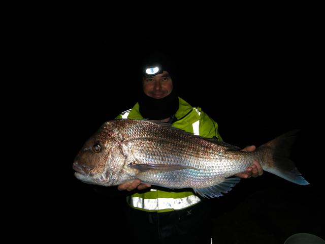 Winter Snapper 09