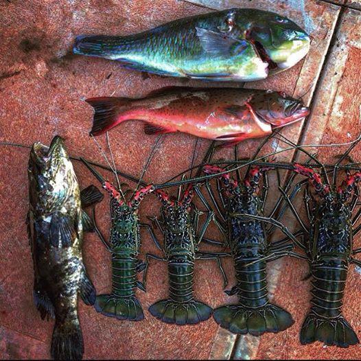 Local catch