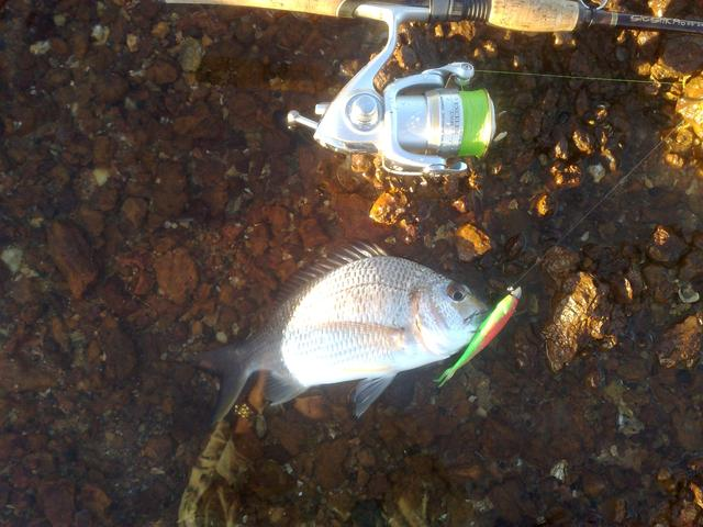 40 mile bream