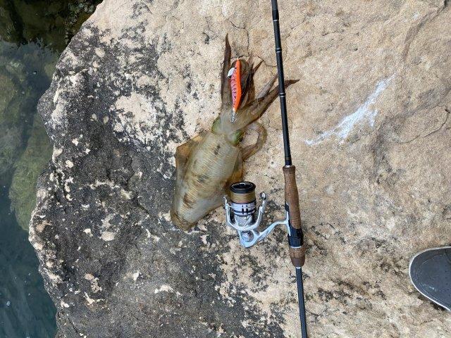 Dongara squidding