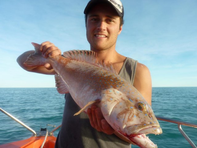 Broome Coral Trout
