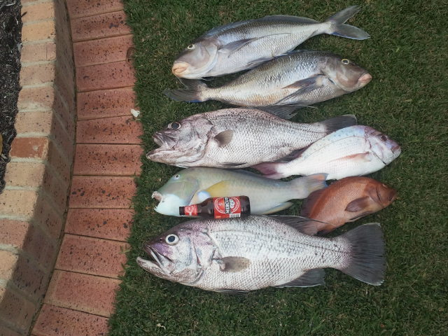 Todays catch