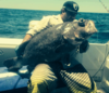 Bass Grouper
