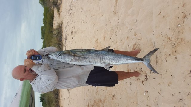 1.38 m Monkey Mia spanish mackerel