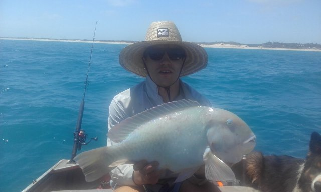 Yesterdays bluebone