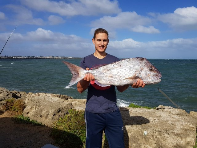 Snapper from the rocks metro