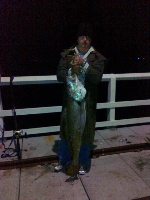 busso jetty mulloway