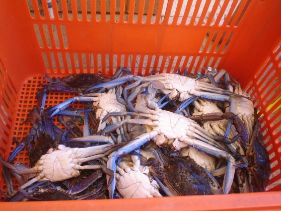 26 crabs