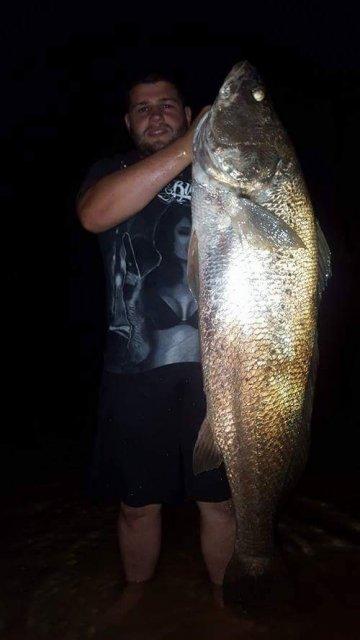 28kg Swan river Mullaway