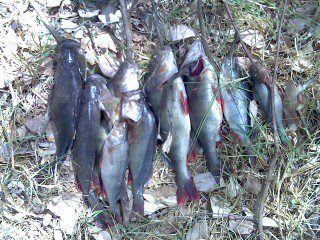 10 redfin