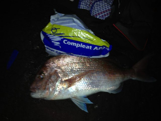 Snapper off the rocks