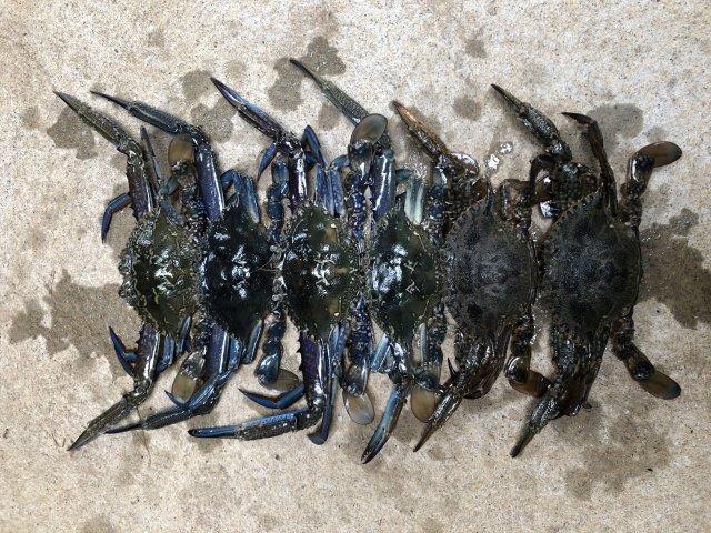 Few crabs