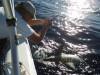 Jigging Shark Release