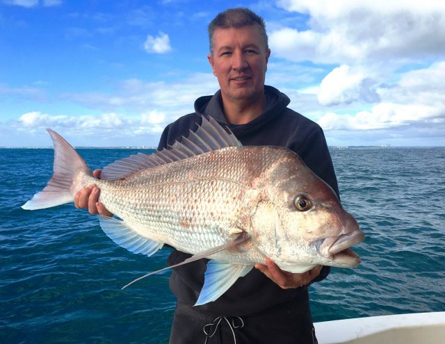 Snapper on the KG gear