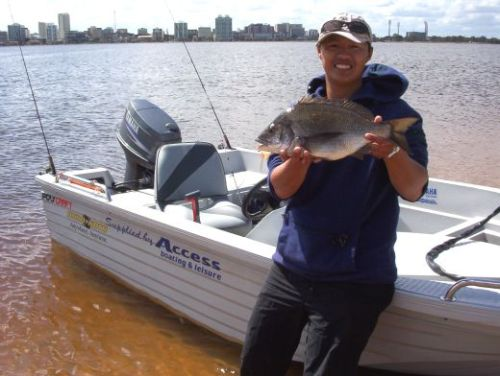 50cm black bream