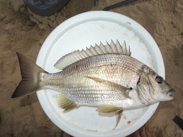 Lures  Fishing Fishermans Marine amp Outdoor