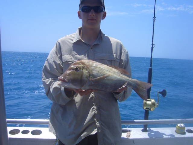 Another snapper
