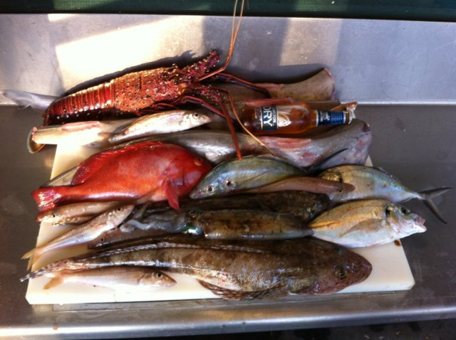 Saturdays Catch