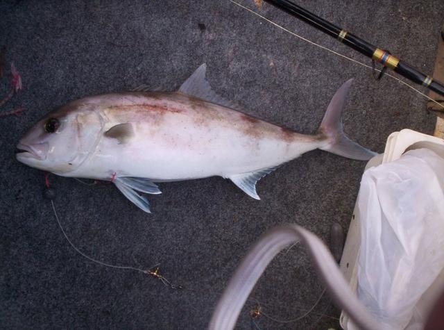 City Beach Samsonfish
