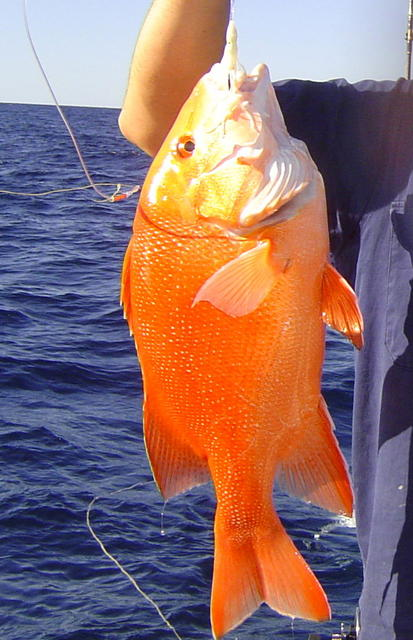Exmouth Red