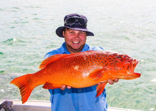 Coral Trout off Exmouth