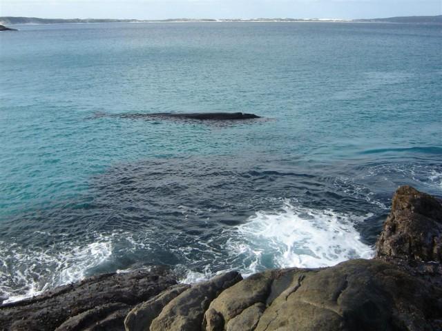 Bremer Whale