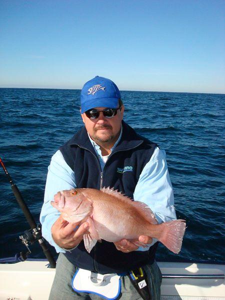 breaksea cod