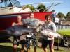 bunbury dhu fish 19kg , 14kg , 12kg