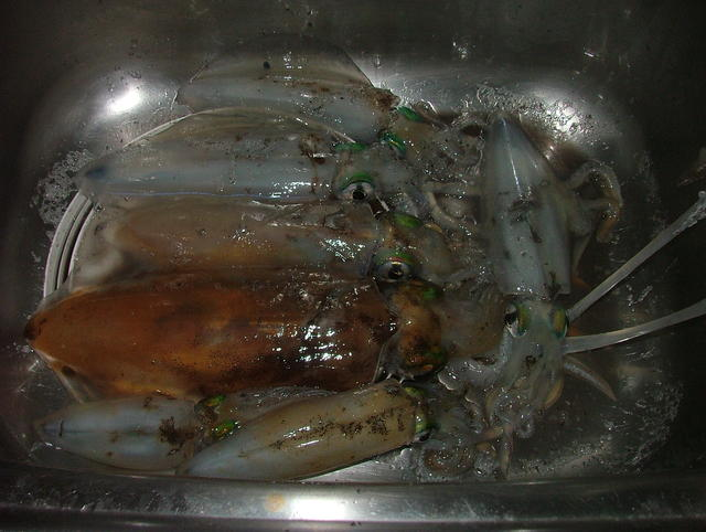 """Late arvo Squid session on """"The Mole"""""""