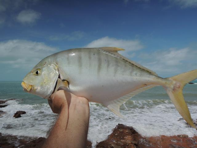 Fish Id Trevally family