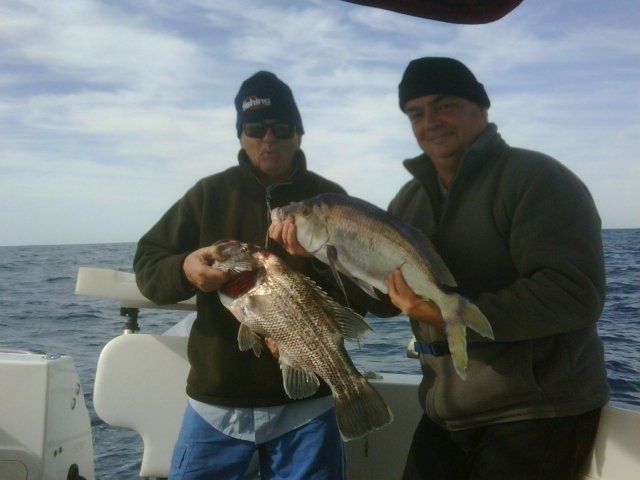 Queen snapper And a dhuie