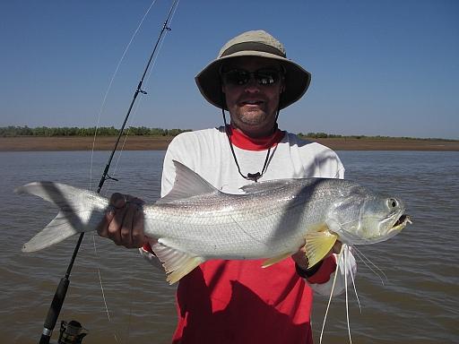 Glenns Threadfin Salmon