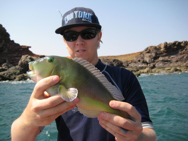 jay with a small bluebone