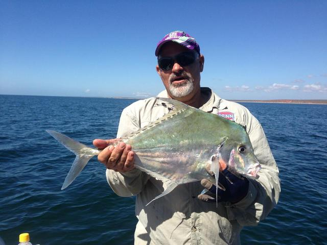 Monkey Mia Diamond Trevally
