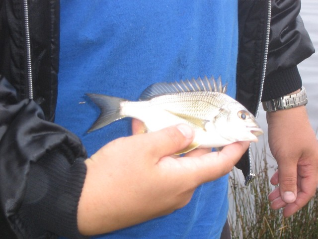Some of the old swaw fish photos