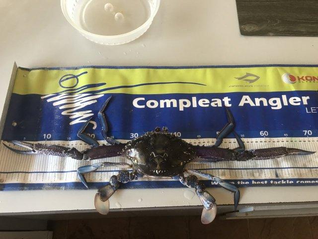 Nice crabs