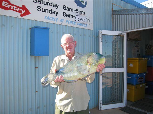 Walter Pike - Black Spot Tuskfish