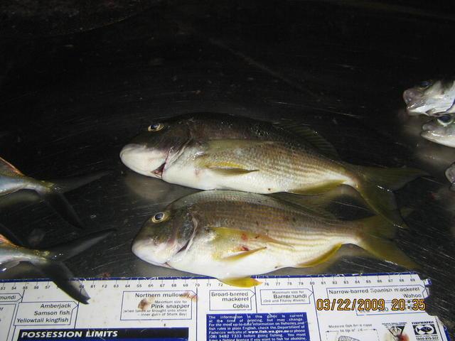 Sunday Fish