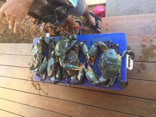 Covid Crabs