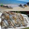 Hobie Kayak Squid sesh