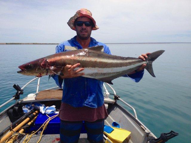 Gulf Cobia